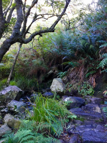Table Mountain hiking route Skeleton Gorge