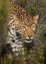 Big 5 safari Cape Town