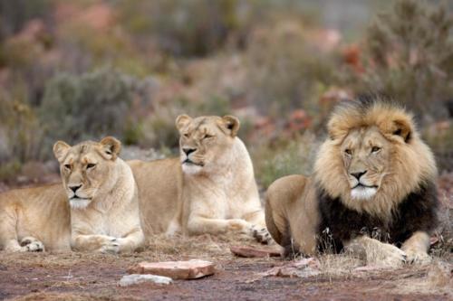 Safari drives close to Cape Town