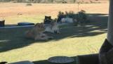 Gorah wildlife safari