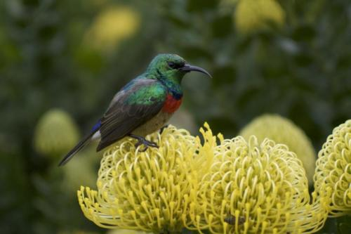 Nature tours Cape Town