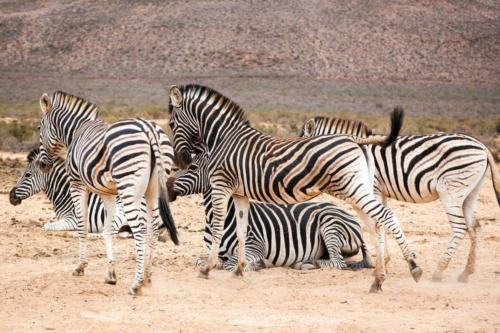 Safari parks Cape Town South Africa