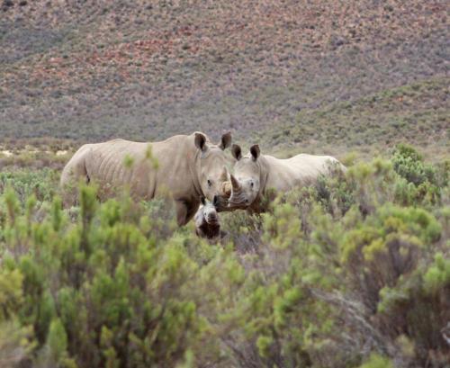 Big 5 safari park Cape Town