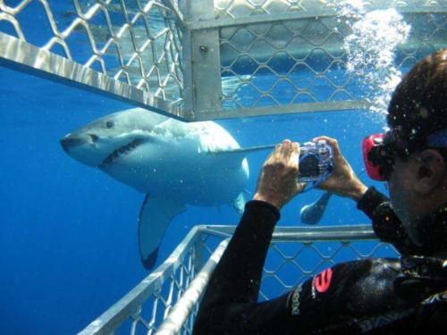 Shark tours cape town