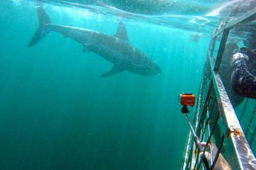 Sharks in South Africa