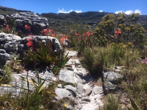 Table Mountain hike to hidden location