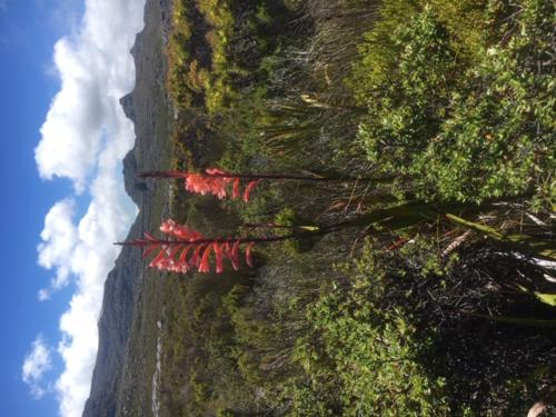 Table Mountain secret hiking tours