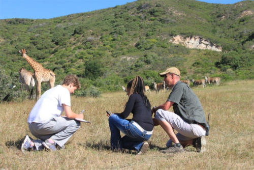 Safaris at Gondwana