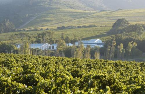 Vinyards winelands South Africa