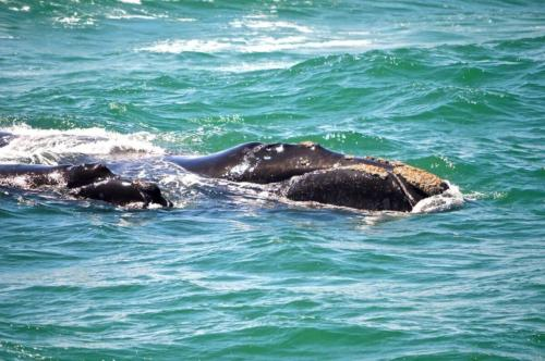 Whale tours Hike Addicts