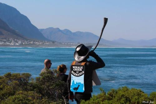 Whale watcher in South Africa