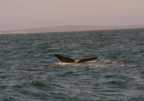 Whales SA