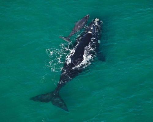 Whales playing in South Africa