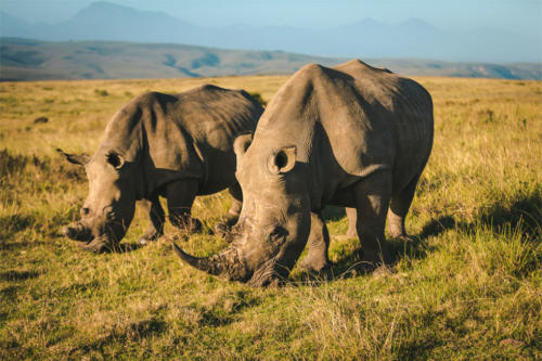 Gondwana Wildlife