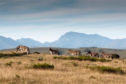 Safari tour Gondwana