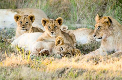 Gondwana safari drive