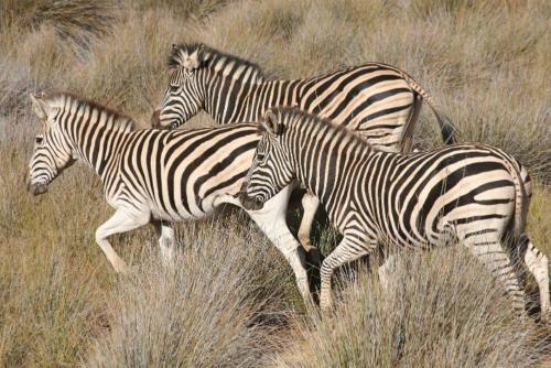 safari close to Cape Town