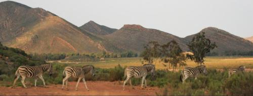 Game Reserve near Cape Town
