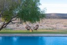 gondwana_pool_view