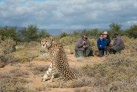 close up wildlife spotting at Sanbona