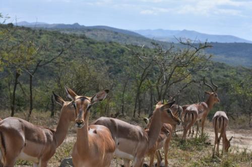 Wildlife safari park